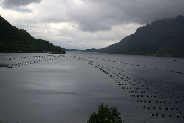 Zdjęcia: norwegia, łowisko, NORWEGIA