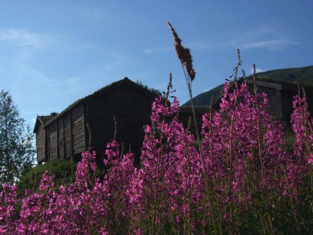 Zdjęcia: Rjukan, wśród kwiatów, NORWEGIA