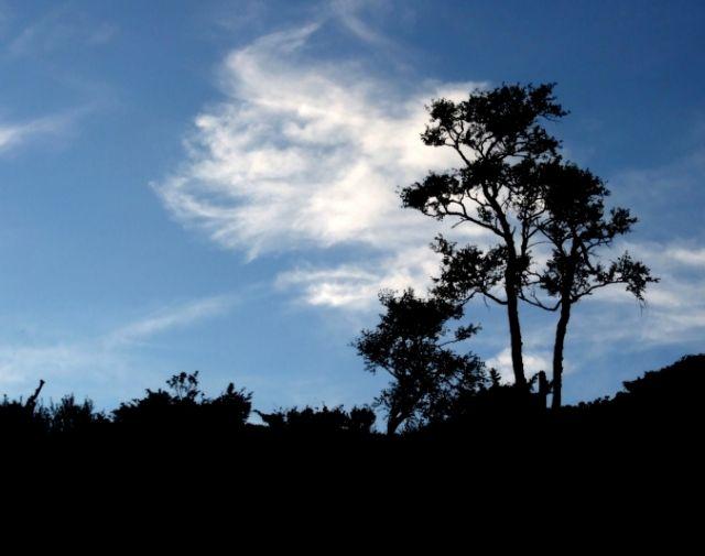 Zdjęcia: przy drodze Oslo-Bergen, drzewa, NORWEGIA