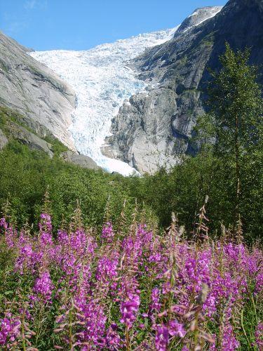 Zdjęcia: Jostedalsbreen Nasjonalpark, Jęzor lodowcowy4, NORWEGIA