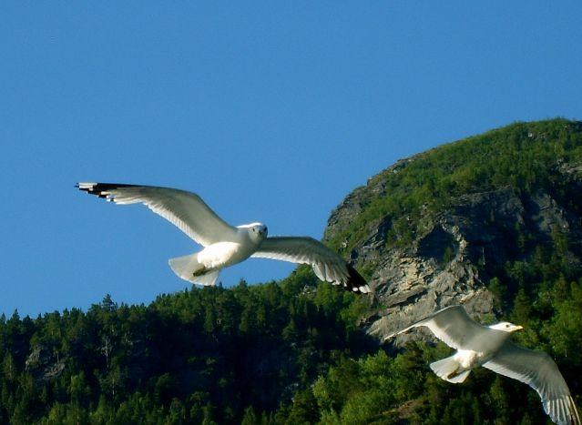 Zdjęcia: Geirangerfjord, Mewy2, NORWEGIA