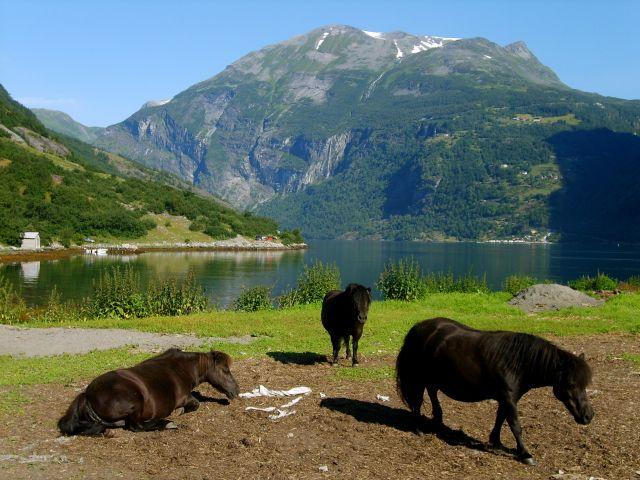 Zdjęcia: Geirenger, nad Geirangerfjord, Koniki, NORWEGIA