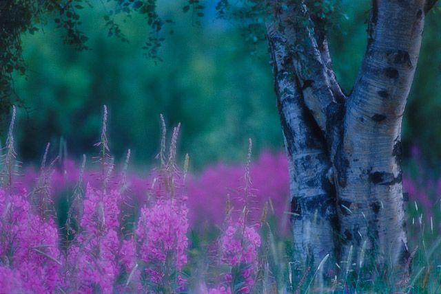 Zdjęcia: Za kołem, Północ, Kolory polarnego dnia... w nocy ;-), NORWEGIA