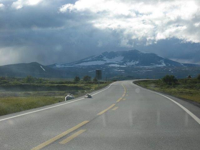 Zdjęcia: gdzies w górach, owce 1, NORWEGIA