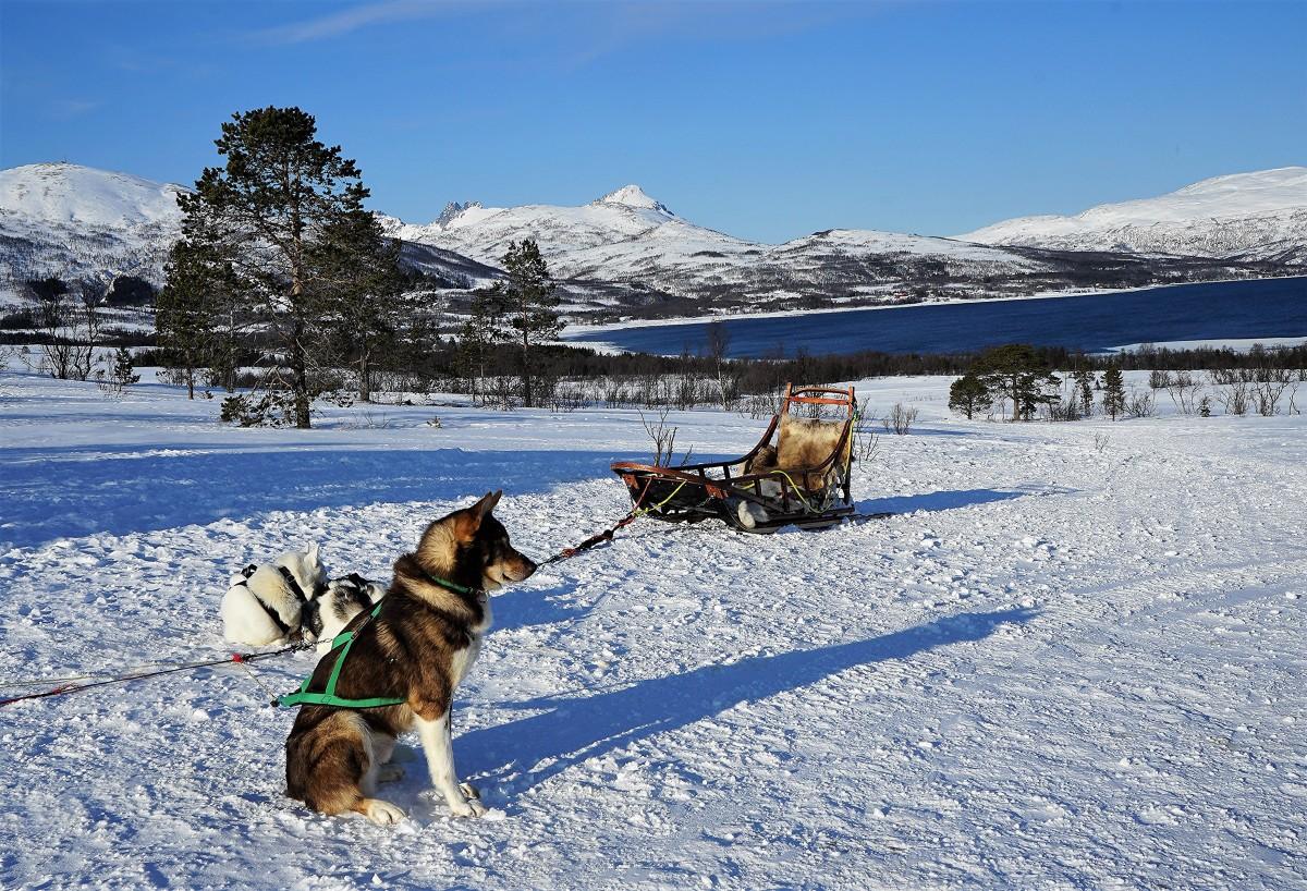 Zdjęcia: Kvaløya, Troms, Ktoś musi czuwać, NORWEGIA