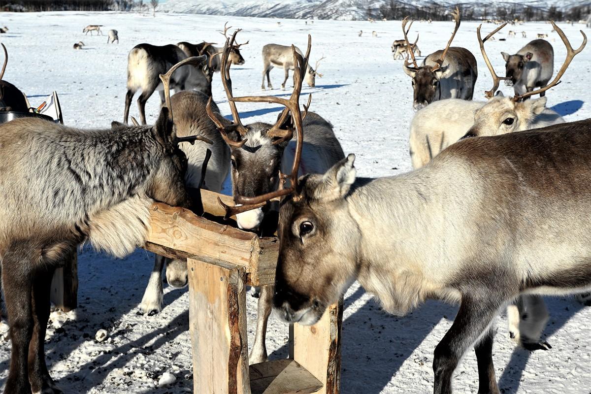 Zdjęcia: Tønsvik, Troms, Małe spięcie przy korycie, NORWEGIA
