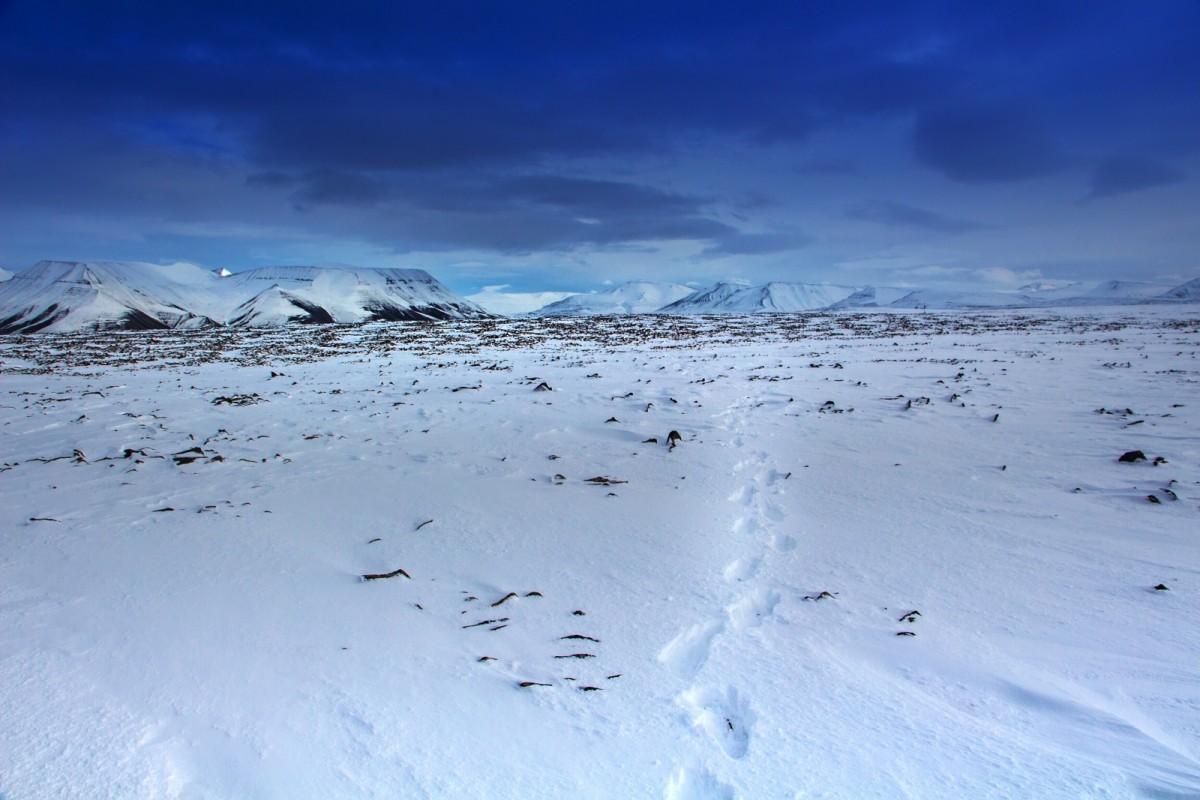 Zdjęcia: Longyearbyen, Svalbard, Svalbard., NORWEGIA