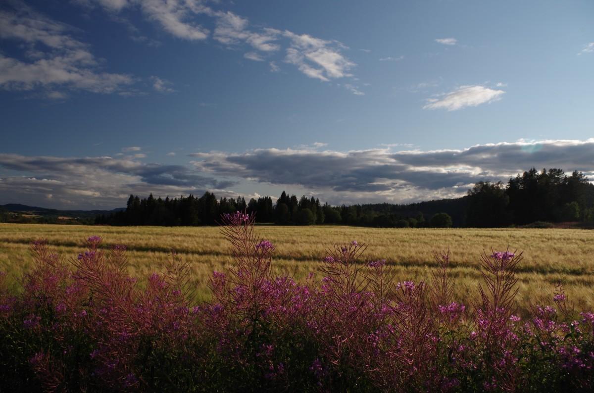 Zdjęcia: na płn. od  Trondheim, Norwegia Środkowa, Prawie jak w Polsce, NORWEGIA