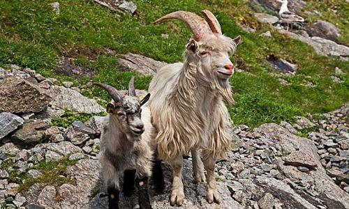 NORWEGIA / południowo - zachodnia Norwegia / Lysefjord / Zainteresowanie