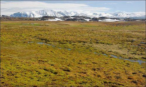 Zdjęcie NORWEGIA / Spitsbergen / Hornsund / Tundra