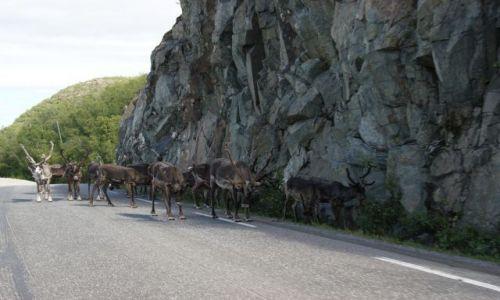 Zdjecie NORWEGIA / - / Norwegia / STOP!