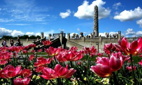 Zdjecie NORWEGIA / - / Oslo, park Vigelanda / Tulipany