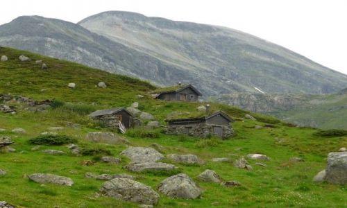 Zdjecie NORWEGIA / - / okolice Geirangerfjord / kamuflaż