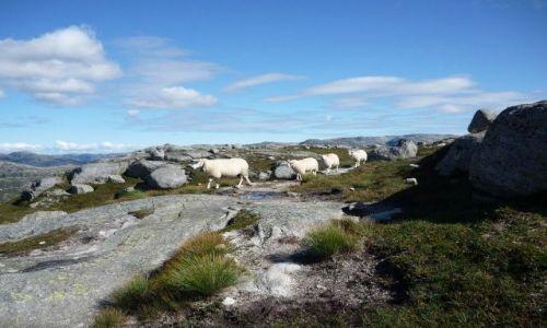 Zdjecie NORWEGIA / Rogaland / Kjerag/Lysefjord  / idziemy na wycieczke, dzwonimy se dzwoneczkiem