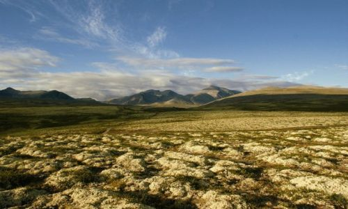 Zdjecie NORWEGIA / Oppland, Hedmark / Park Narodowy Rondane / Rondane nasjonalpark