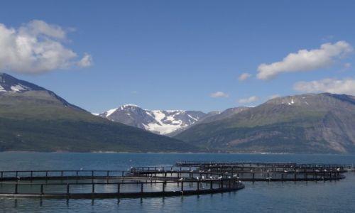 Zdjecie NORWEGIA / Norwegia / Norwegia / Hodowla łososia