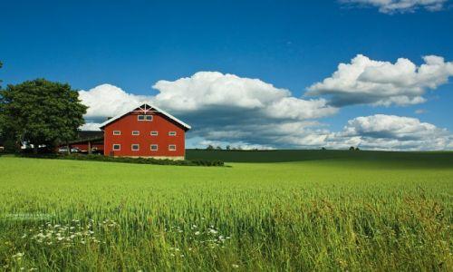 Zdjecie NORWEGIA / Hedmark / okolice Stange / Okolice Stange