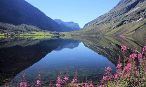 Zdjecie NORWEGIA / Norwegia zachodnia / Geirangerfjord / Na brzegu fiordu