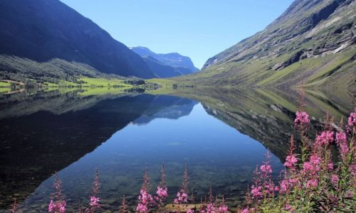 Zdjecie NORWEGIA / Norwegia zachodnia / Geirangerfjord / Na brzegu fiord