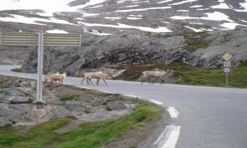 NORWEGIA / Geiranger / Djupvasshytta 1030mnpm / Norwegia-motocyklem