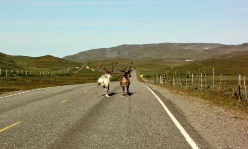 Zdjęcie NORWEGIA / Finnmark / Gdzieś między Altą a Skaidi / Gorzej niż za traktorem :)