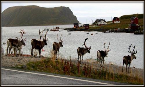 Zdjęcie NORWEGIA / Finmark / Magerøya / Wszystkie moje drogi prowadzą własnie tu