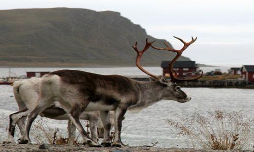 Zdjęcie NORWEGIA / Finnmark / Magerøya / Gdzieś na Magerøyi