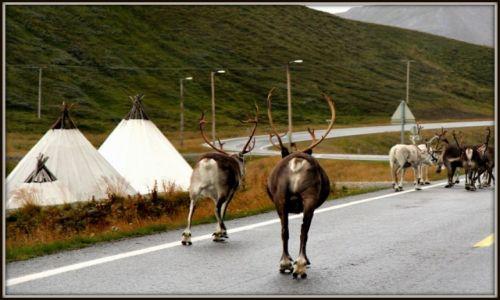 Zdjecie NORWEGIA / Finnmark / Magerøya / Gdzieś na Magerøyi