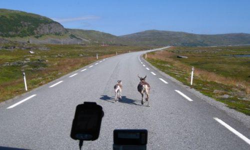 Zdjecie NORWEGIA / norwegia polnocna / półnjoc norwegii / zawsze z mamą