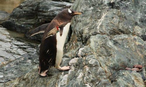 Zdjecie NORWEGIA / Bergen / Oceanarium / Na spacerze