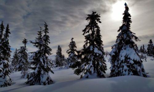 Zdjęcie NORWEGIA / Hedmark / Trysil / zima...