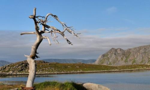 Zdjecie NORWEGIA / Finmark / Gjesvar wyspa Mageroya (Nordcapp) / Jedyne drzewo n