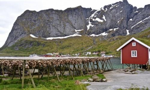 Zdjecie NORWEGIA / Nordland / Reine / suszone dorsze