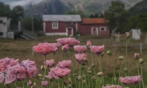 Zdjecie NORWEGIA / płn. Norwegia / ok. Eggum / Swojskie klimaty...