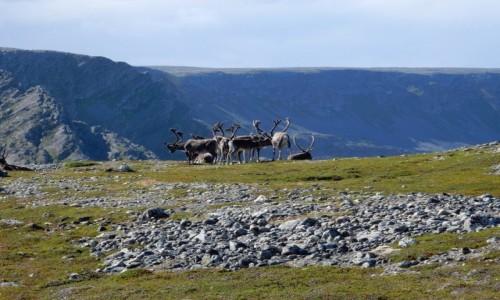 NORWEGIA / Varanger / Hamningberg / Północ Norwegii