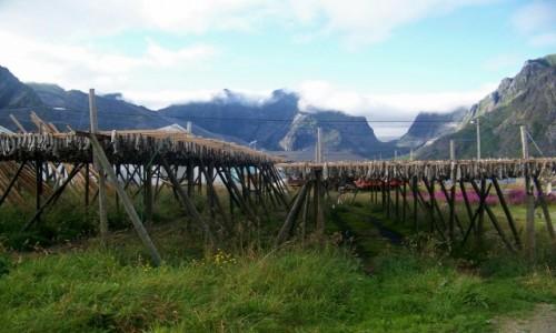 Zdjęcie NORWEGIA / Lofoty / Okolice  Reine / Tørrfisk - słynne lofockie sztokfisze