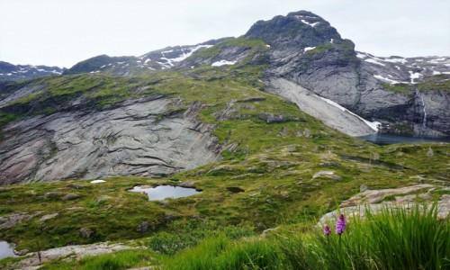 Zdjęcie NORWEGIA / Lofoty / Wyspa Moskenesoya / Krajobraz z kwiatkiem