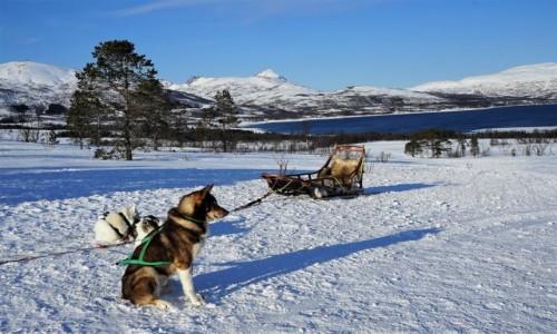 Zdjecie NORWEGIA / Troms / Kvaløya / Ktoś musi czuwać