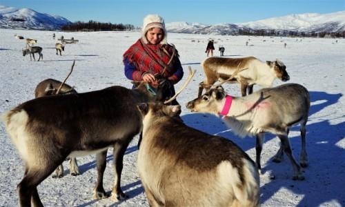 Zdjecie NORWEGIA / Troms / . / Pora na smakołyk