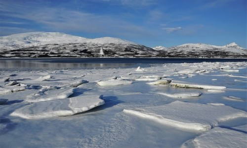 NORWEGIA / Troms / Tromsø / Kra