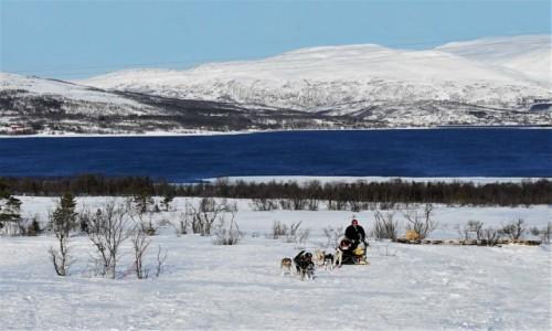 NORWEGIA / Troms / Kvaløya / Zaprzęg