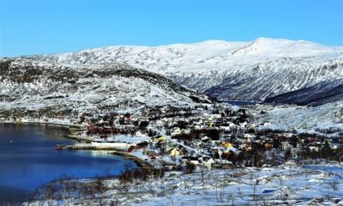 Zdjęcie NORWEGIA / Troms / Ersfjordbotn / Na zboczu