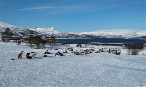 Zdjęcie NORWEGIA / Troms / Kvaløya  / Chwila wytchnienia