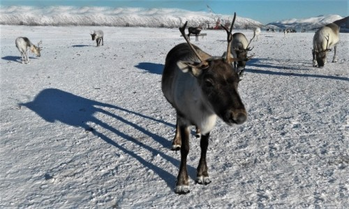 Zdjęcie NORWEGIA / Troms / Tønsvik / Każdy ma swój cień