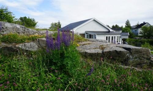 Zdjecie NORWEGIA / Lofoty / Sørvågen, Wyspa Moskenesoya  / Natura za progiem