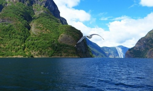 Zdjęcie NORWEGIA / Norwegia południowo zachodnia / Naroyfjord / Naroyfjord