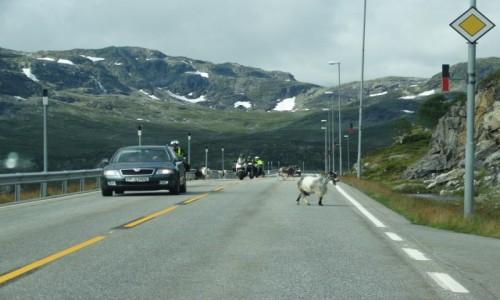 Zdjecie NORWEGIA / Telemark / Haukelifjell / Norwegia