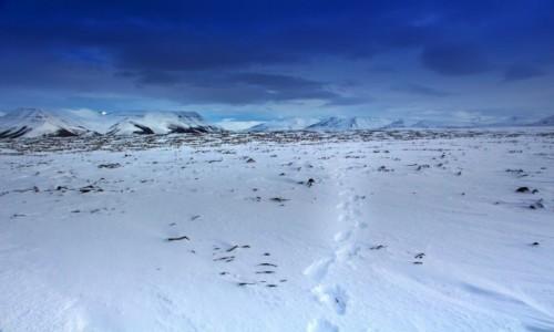 Zdjecie NORWEGIA / Svalbard / Longyearbyen / Svalbard.