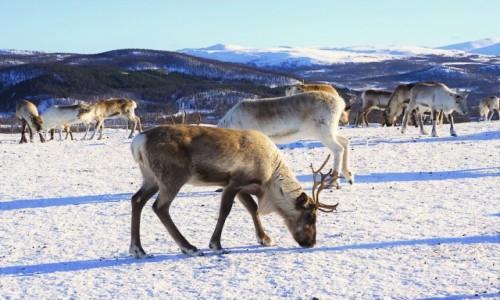 Zdjecie NORWEGIA / Troms / Tromsø / Stadko Św. Mikołaja