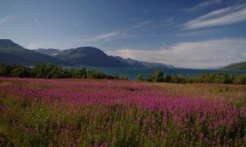 Zdjęcie NORWEGIA / Na wysokości Tromso / Skibotn / Północna Norwegia